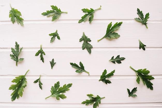 Composition de feuilles de différentes tailles sur fond blanc