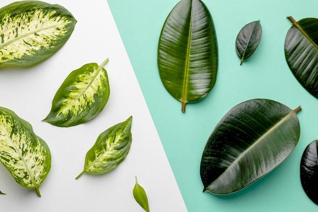 Composition de feuilles vertes à plat
