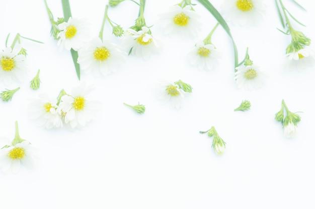 Composition de fleurs, bordure faite de fleurs de marguerite blanche,