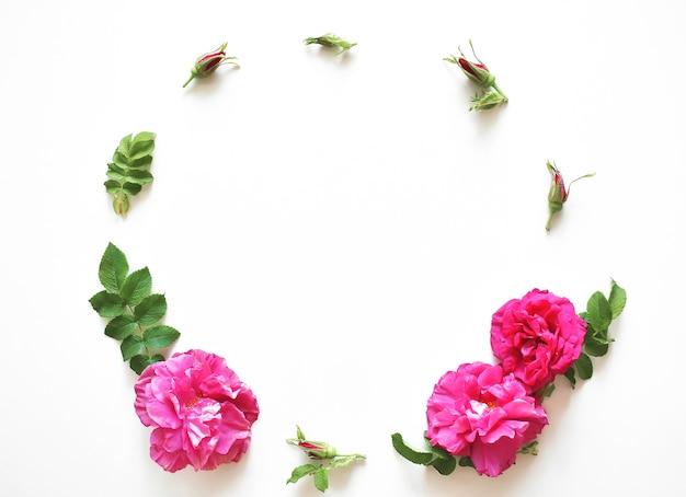 Composition de fleurs. cadre de fleurs roses sur fond blanc. mise à plat, vue de dessus, espace copie.