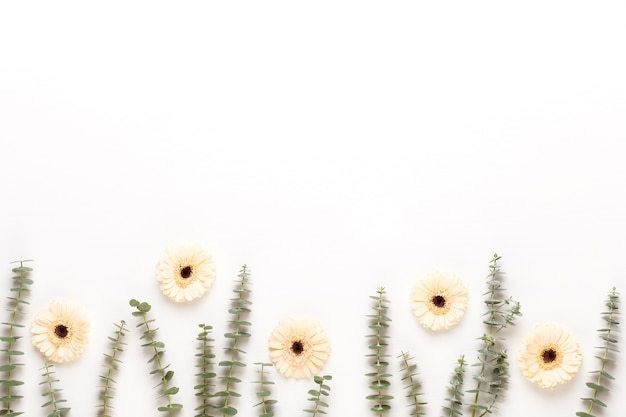 Composition de fleurs. cadre en gerbera pastel sur fond blanc. mise à plat, vue de dessus, espace de copie.