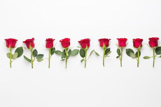 Composition de fleurs. cadre en rose rouge sur fond blanc. mise à plat, vue de dessus, espace de copie.