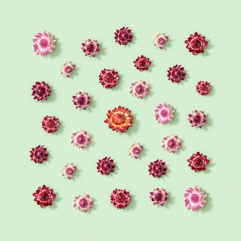 Composition de fleurs. carte de voeux de fleurs rouges séchées. art floral