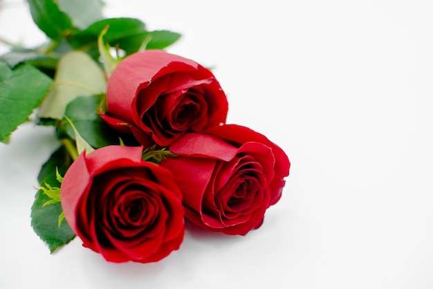 Composition de fleurs faite de fleurs roses sur fond blanc