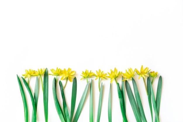 Composition de fleurs et feuilles. motif composé de fleurs jaunes et de feuilles vertes sur mur blanc. mise à plat, vue de dessus, espace copie