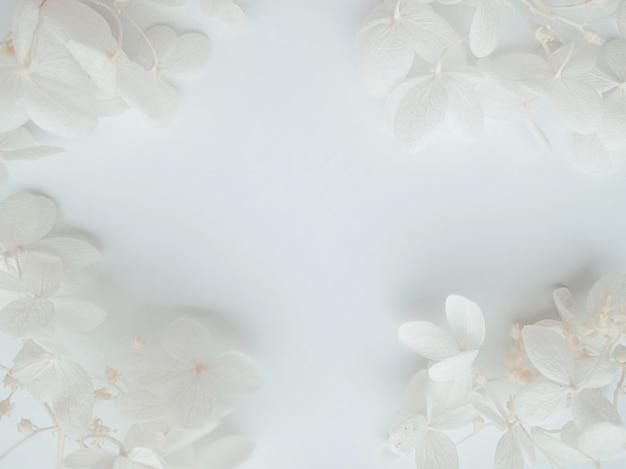Composition de fleurs de fleurs d'hortensia bleu sur fond blanc. printemps, modèle d'été pour vos projets. mise à plat, espace de copie.
