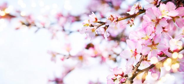 Composition avec des fleurs de printemps