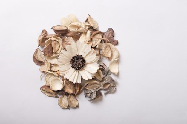 Composition de fleurs séchées sur fond blanc central.
