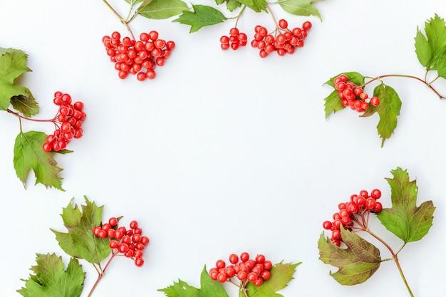 Composition florale d'automne. cadre fait de baies de viorne sur fond blanc