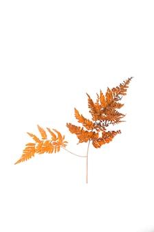 Composition florale d'automne feuilles sèches sur fond blanc concept d'automne d'automne vue de dessus à plat