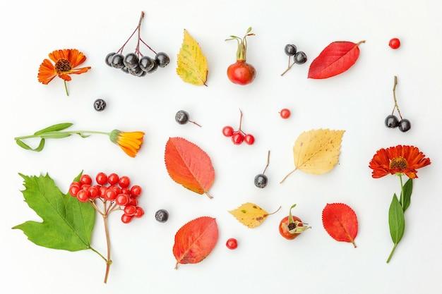 Composition florale d'automne. plantes viburnum rowan berries dogrose fleurs fraîches feuilles colorées isolés sur fond blanc. concept de papier peint d'écologie de plantes naturelles d'automne. mise à plat, vue de dessus