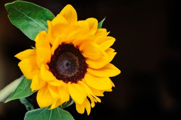 Composition florale avec beau tournesol