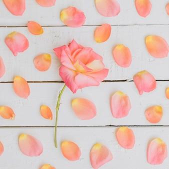 Composition florale. cadre en fleurs séchées.