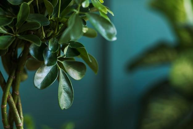 Composition florale élégante avec de belles plantes, cactus et plantes succulentes dans des pots design et hipster sur la table basse en marbre. salon naturel. murs verts. concept de jardinage à la maison. modèle.