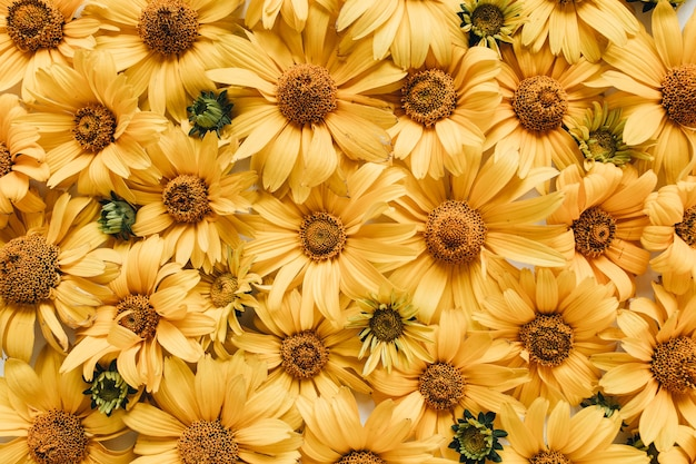 Composition florale avec des fleurs de marguerite jaune