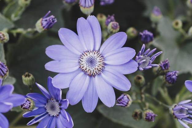 Composition florale moderne avec style élégant