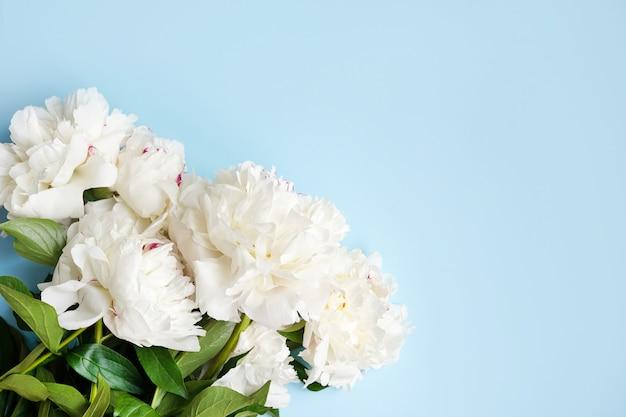 Composition florale de pivoines blanches sur mur bleu