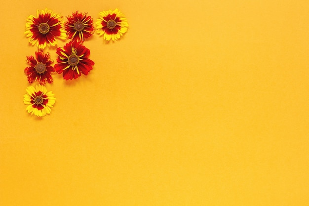 Composition florale. plusieurs fleurs rouges jaunes dans le coin supérieur gauche sur fond orange. composition de haut en bas à plat.