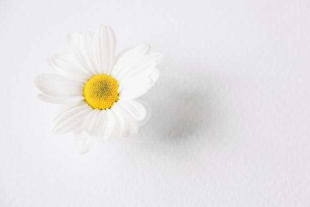 Composition florale avec une seule fleur