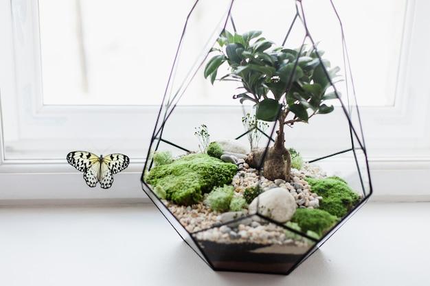 Composition de florarium de plantes succulentes, de pierre, de sable et de verre, élément d'intérieur, décoration intérieure, terarium de verre
