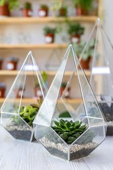 Composition intérieure de décoration d'art moderne succulentes en florarium en verre sur table en bois à l'atelier