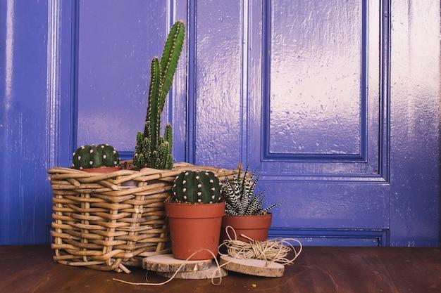 Composition de jardinage avec des cactus