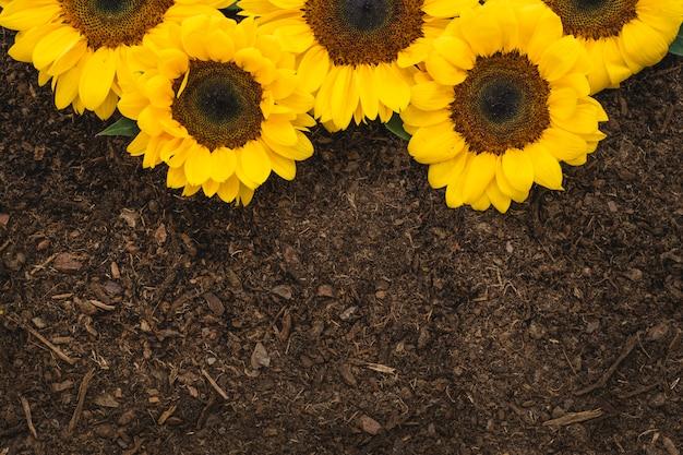 Composition de jardinage avec une vue rapprochée des tournesols