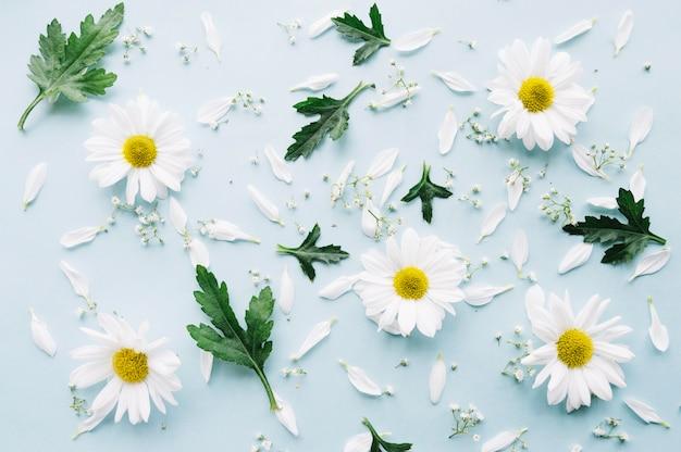 Composition de marguerites, de petites fleurs et de feuilles sur une surface bleu clair
