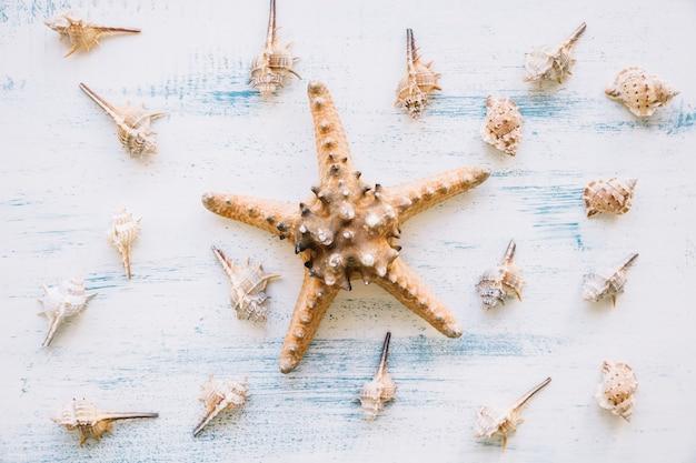 Composition marine avec des étoiles de mer et des mollusques