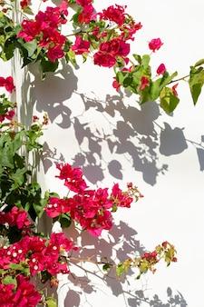 Composition minimale de plante naturelle