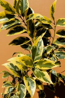 Composition minimaliste de plante naturelle sur fond monochromatique