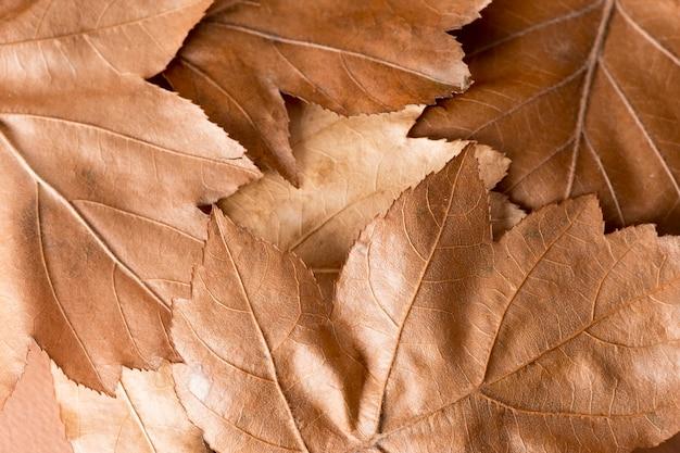 Composition de nature morte monochromatique avec des feuilles