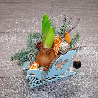 Composition de noël en traîneau décoratif avec branches de pin, cônes, tranches d'orange séchées, cannelle, boule et bulbe d'amaryllis. photo en gros plan. sur fond sombre couvert de neige