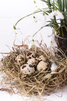 Composition de pâques avec des fleurs de perce-neige et un petit nid avec des œufs de caille sur une table en bois blanc