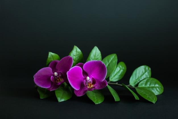 Composition de plantes d'intérieur de zamioculcas zamiifolia