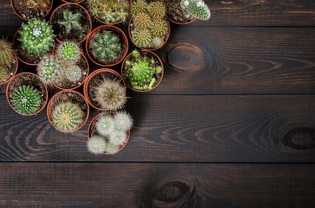 Composition de plusieurs mini cactus sur un fond en bois foncé, mise à plat, vue de dessus.
