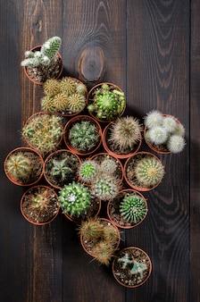Composition de plusieurs mini cactus sur une table en bois sombre, mise à plat, vue de dessus.
