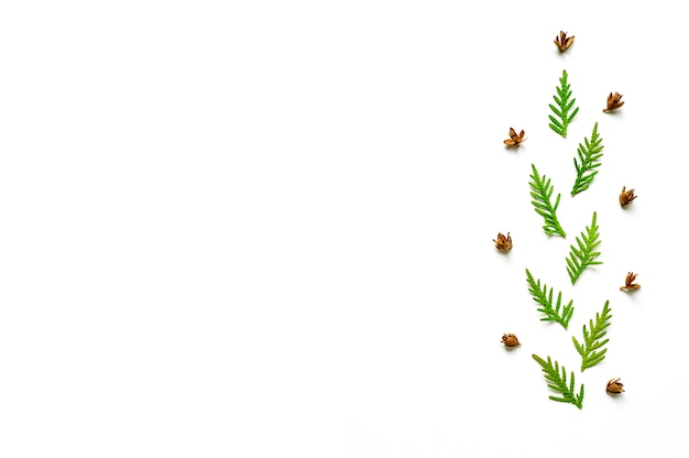 Composition d'un rameau de thuya et de minuscules cônes isolés sur fond blanc.
