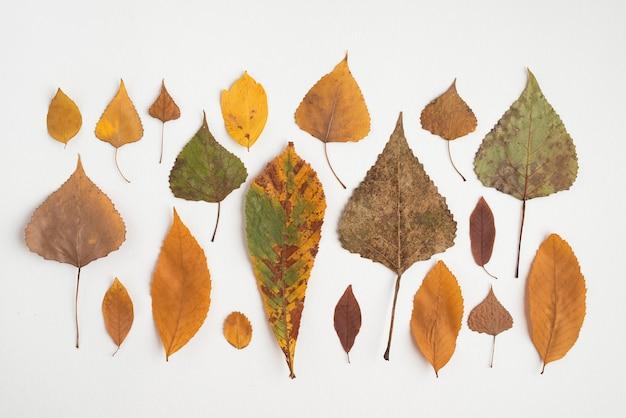 Composition en rangée avec des feuilles d'automne multicolores