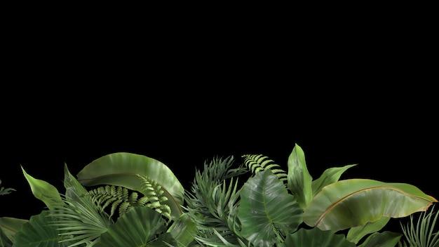 Composition de rendu d de plantes tropicales sur fond noir