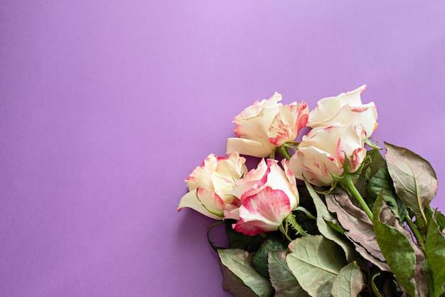 Composition de roses anglaises fleurs festives sur violet
