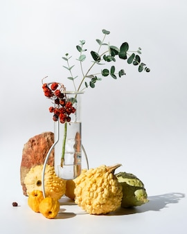 Composition saisonnière d'automne avec des citrouilles décoratives jaune pâle et d'eucalyptus dans un vase en verre sur fond blanc avec des ombres