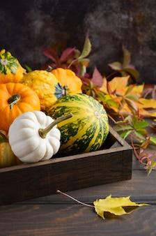Composition de thanksgiving automne avec mini citrouilles assorties dans un plateau en bois sur une table en bois