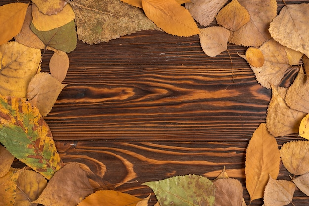 Composition de la trame des feuilles tombées en automne