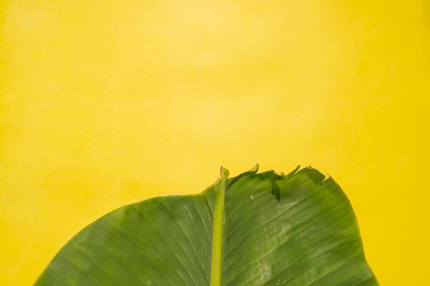 Composition tropicale d'été. feuille de bananier sur fond de papier jaune. concept d'été. feuilles de bananier isolés sur fond jaune