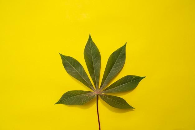 Composition tropicale d'été. feuilles de manioc sur un fond de papier jaune. concept d'été. feuilles de manioc isolés sur fond jaune