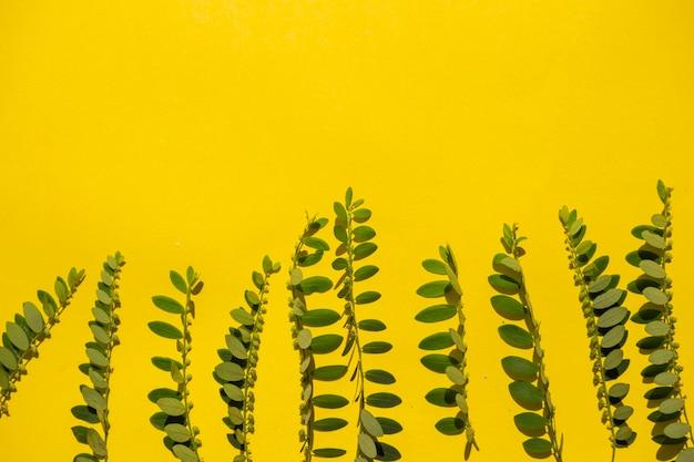 Composition tropicale d'été. plante verte sur fond de papier jaune. concept d'été.