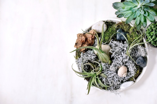 Composition végétale avec air tillandsia, mousse et différentes plantes succulentes eonium, cactus en pots en céramique sur table en marbre blanc.