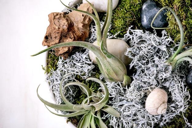 Composition végétale avec air de tillandsia, mousse et pierres de table en marbre blanc.
