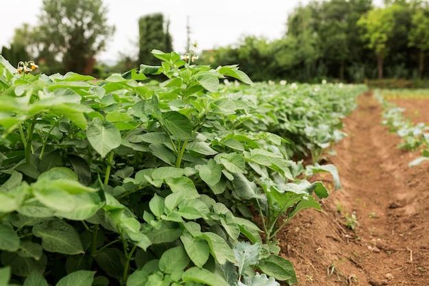 Concept d'agriculture biologique des plantes